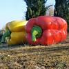 Peperoni in #Chianti#Tuscany#tuscanygram#Chiantisculpturepark