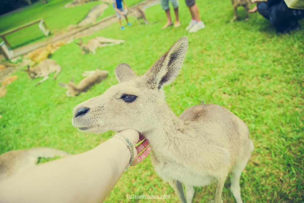Kangaroo enjoying a good cuddle and posing for the camera