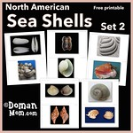 Free Sea Shells Flash Cards (set 2)