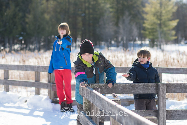 Winter walk on the Jack Pine Trail