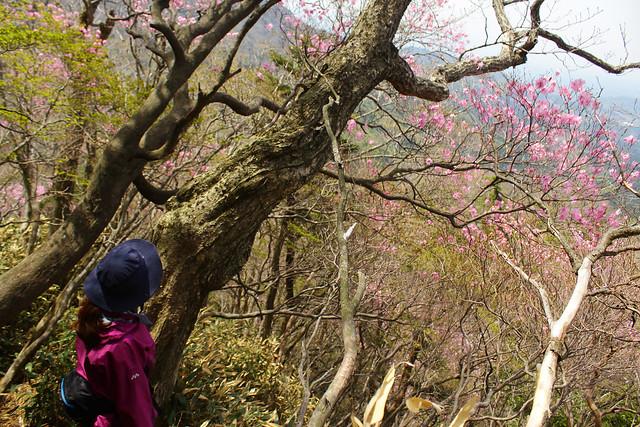 2014-05-06_02496_九州登山旅行.jpg