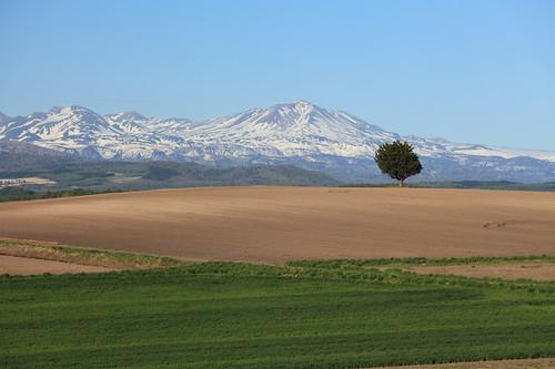 大雪山と一本の木