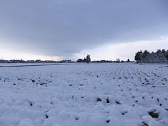 A snowy morning in March. 3月雪の朝