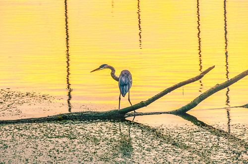 bird heron sunrise wildlife sanctuary