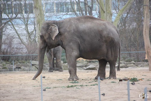 Berliner Zoo 22.02.20153