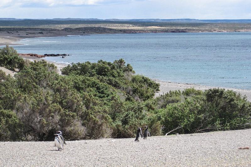 Patagonia 244.jpg