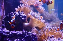 coral reef(1.0), animal(1.0), coral(1.0), fish(1.0), coral reef fish(1.0), organism(1.0), marine biology(1.0), invertebrate(1.0), aquarium lighting(1.0), freshwater aquarium(1.0), underwater(1.0), reef(1.0), pomacentridae(1.0), sea anemone(1.0),