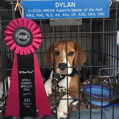 "Dylan earns the Level 2 Interior Element Specialty title!! He got all the hides (7 hides) in all 4 different interior search areas. So proud of my little hunter who knows how to find his ""bunnies""!!"