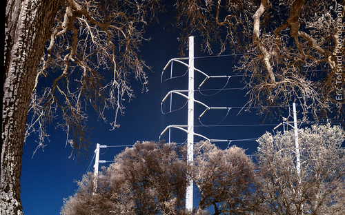 High Voltage Interconnect, framed by Oak Trees, in Infrared (IR)