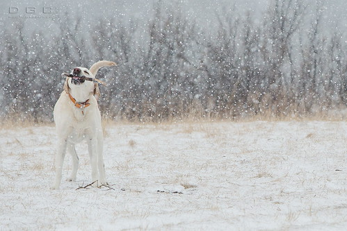 Dog+Stick +Snow = Fun