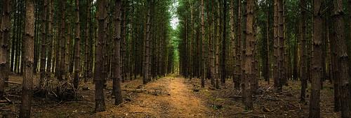 uk trees england panorama nature forest landscape woods nikon sigma cannock chase staffordshire 1750mm d7100