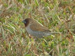 robin(0.0), sparrow(0.0), blackbird(0.0), lark(0.0), wren(1.0), animal(1.0), prairie(1.0), ortolan bunting(1.0), fauna(1.0), finch(1.0), emberizidae(1.0), bird(1.0), wildlife(1.0),