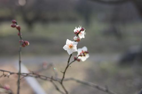 梅 ~初春~