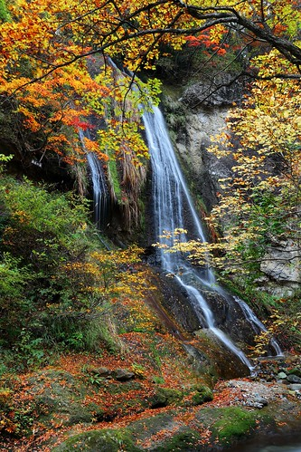 travel autumn trees fern green fall nature beautiful leaves yellow japan forest trekking canon river gold waterfall colorful stream exposure gallery natural artistic sightseeing 日本 bleak ravine 紅葉 maples 自然 milky miyagi yamagata impression beech silky 日本東北 楓葉 山形 大自然 秋天 瀑布 宮城 溪流 樹木 森林 楓樹 landscapephotography snakewood 綠意 落葉 仙山線 天然記念物 トレッキング 蕨類 森林浴 ブナ autumnscenery 山毛櫸 風景攝影 溪瀑 northeastjapan 紅葉川溪谷 面白山高原駅 櫸木 蛇木 特別名勝 北東北 forestbath 藏王國定公園 藤花の滝 仙山隧道 仙山トンネル 奧羽山脈