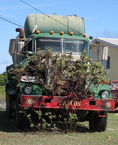 Now That's Imaginative Gardening!