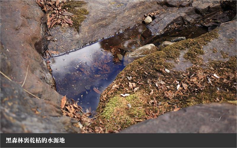 黑森林裏乾枯的水源地