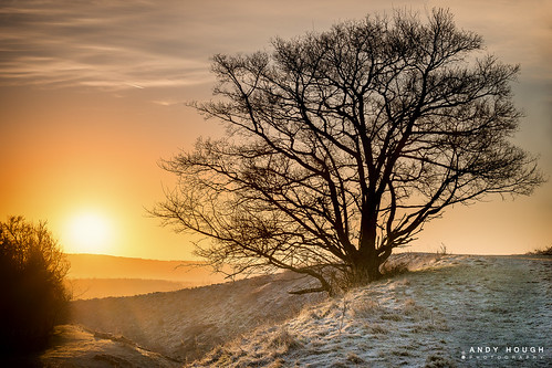 winter orange tree sunrise frost glow sony wittenhamclumps southoxfordshire littlewittenham a99 sonyalpha andyhough slta99v andyhoughphotography