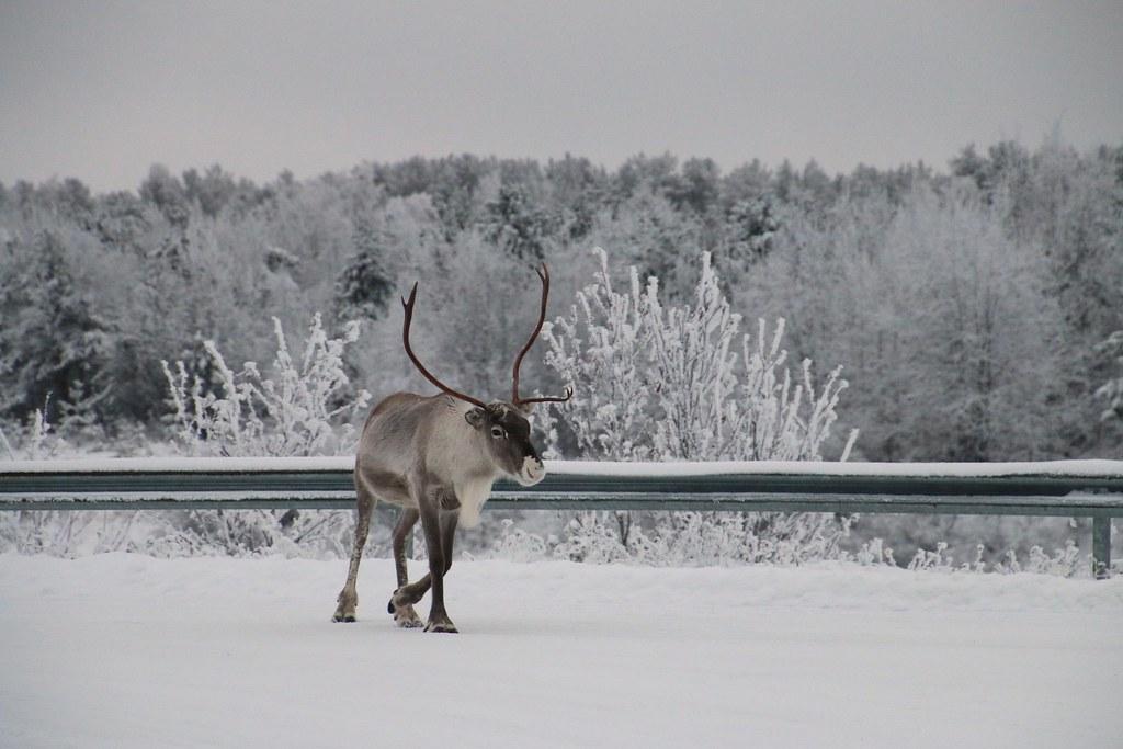 Finland119