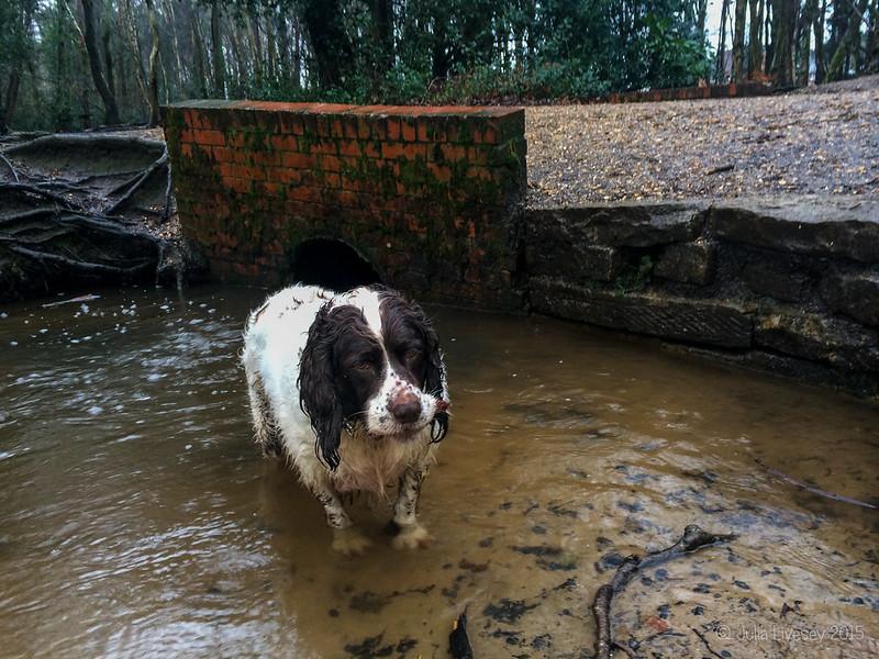 An even wetter dog