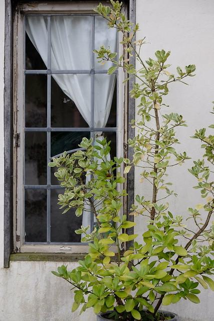 Ablakpárkányon zöld.