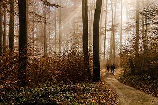 Forest's Beams of Light, Saltzburg