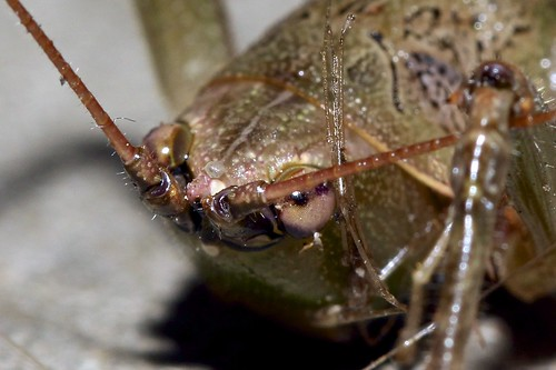 Grasshopper - Head shot