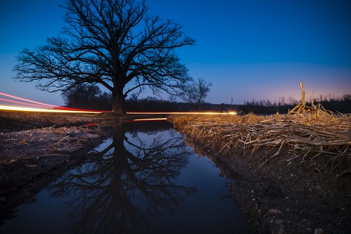"""Дуб дерево"" 橡樹 ""شجرة البلوط"" Oak Tree ""Burr Oak"" water puddle reflection McBaine ""McBaine Missouri"" Missouri BoCoMo 2008 December Notley ""Notley Hawkins"" 10thavenue ""Oak Tree"" Árvore עץ Albero 樹 Дуб sunset sky ""nice work"" http://www.notleyhawkins.com/ ""Missouri Photography"" ""Notley Hawkins Photography"" ""Rural Photography"" ""Boone Bounty"" ""Boone County Missouri"" 2010"