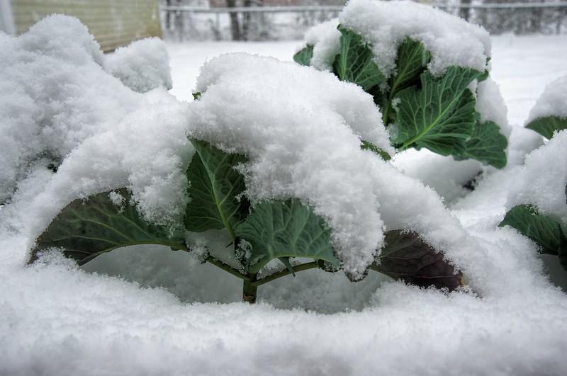 snowstorm_030_2015-02-22_clarity