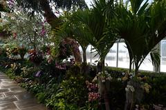 Tropical Inside - Freezing Outside