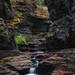 Watkins Glen Oasis by Mike Ver Sprill - Milky Way Mike