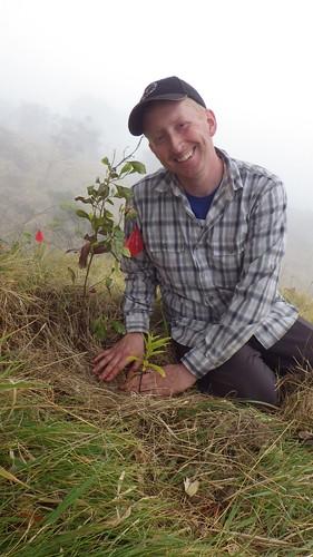 Volunteer Ben Davis planting 'Iliahi.