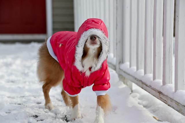 Small Dog Jacket Dickies