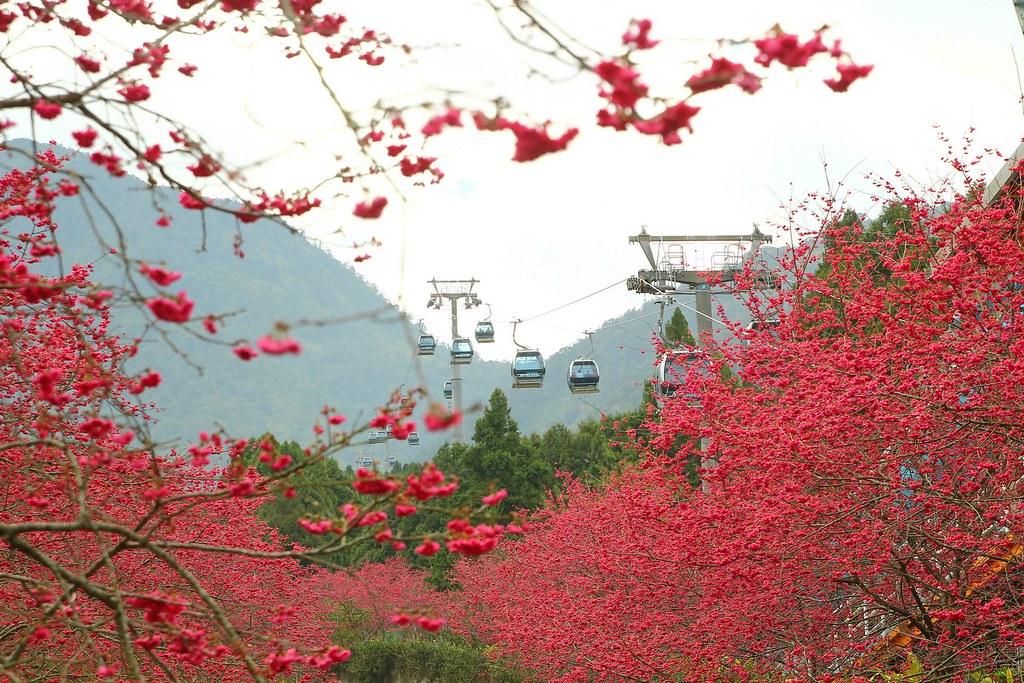 九族櫻花祭 (136)