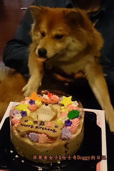 吉快樂寵物蛋糕11