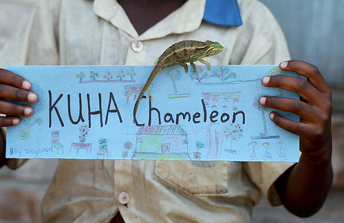 The KUHA Chameleon