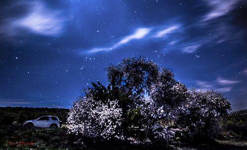 La noche del almendro
