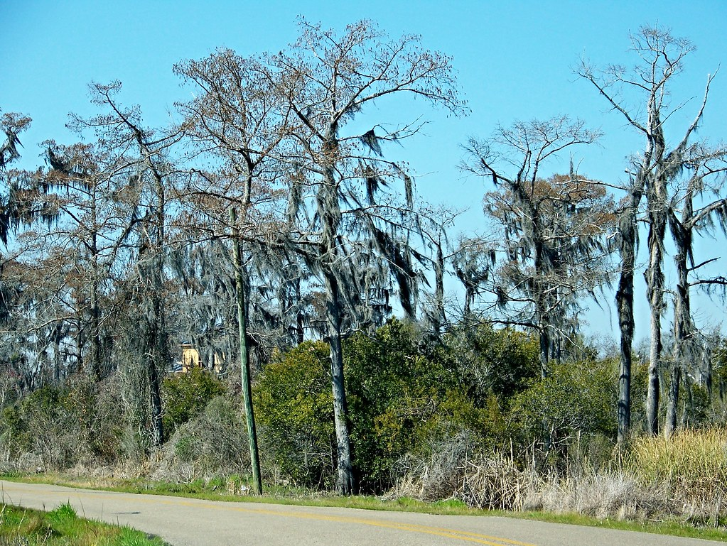Bedico Louisiana Tripcarta