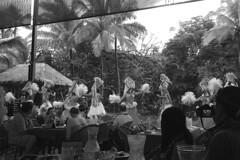 Polynesian Cultural Center - Performances