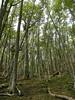 Bosques en Navarino