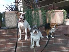 Jake, Bowie & Richie