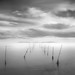 Reeds and clouds 2 by Mariano Belmar Torrecilla