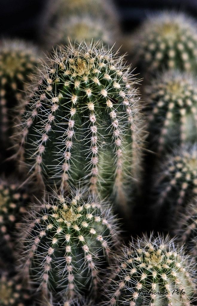 Cactus del jardÃ-n