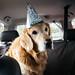 Happy 9th birthday, Brady! by Brady the Golden Retriever
