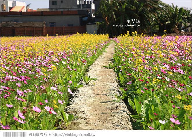 【南新彩繪村】彰化埔鹽/南新立體彩繪村~隱藏版的花海圍繞整村,美景如畫!44
