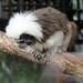 Melbourne Zoo Dec 10