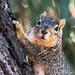 Curious Momma Squirrel.jpg