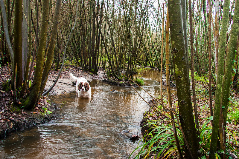 Max finds the stream into the lake that has been cleared