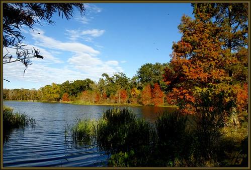 trees sky nature landscape scenery texas fallcolors sony scenic brazosbendstatepark a700 bbsp sonya700 wanam3