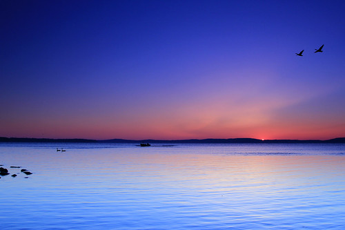 water dawn boat geese fishermen maryland chesapeakebay sunrisedawn havredegracemaryland