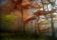 ForestalLuminescence